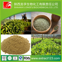 10:1 Yerba Mate Extract Powder