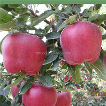 2015 China Fresh big red taste good Fuji qinguan huaniu apple 100#,113#,125#