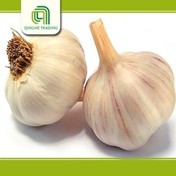New design fresh garlic for sale with great price