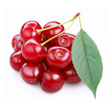 Delicious fresh cherry price with great quality