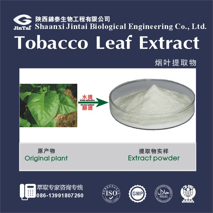 High Qualiy Pure Tobacco Leaf Extract Powder