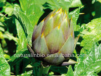 Chinese artichoke extract 5:1 for Pharmacy
