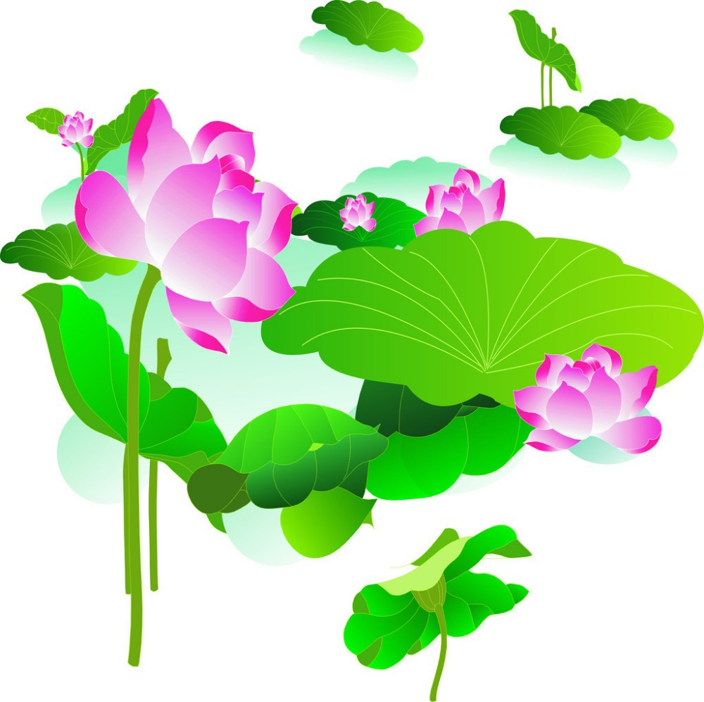 Cheap Lotus Plant Seed, find Lotus Plant Seed deals on line at ...