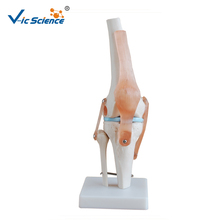 Hot sale model of knee joint arthroscopy