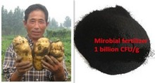 Bacteria feritlizer to improve soil and reduce soil born disease
