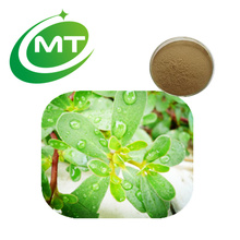 Hot Sell Health Product 10:1 Bacopa Monnieri Extract Powder