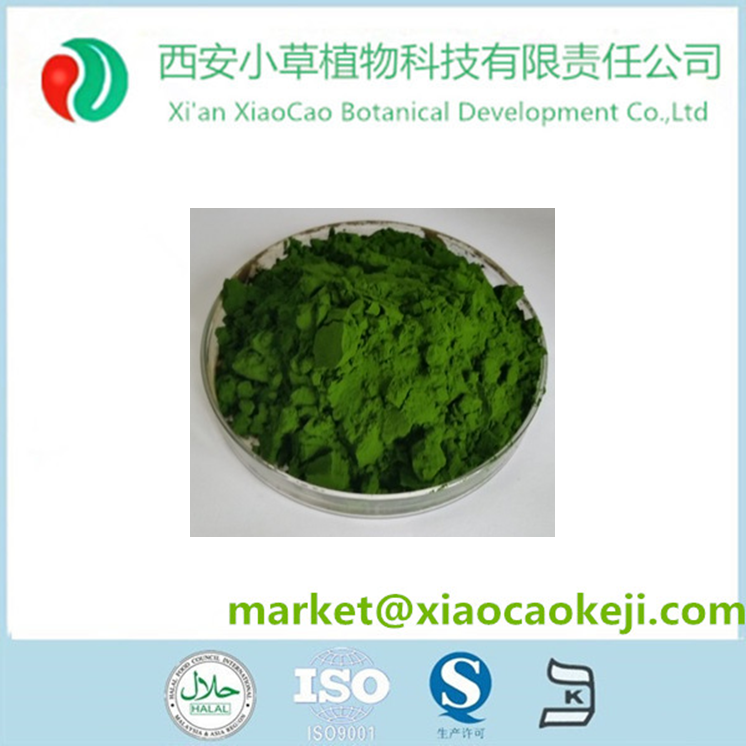 Chlorella 50% Protein Powder / Chlorella Vulgaris Extract