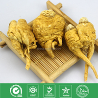 Maca Root Extract high quality tea extract
