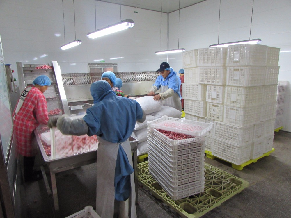 new crop frozen strawberries exporter in China