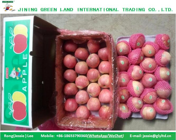 SWEET FUJI APPLE IN RED COLOR TO INDIA MARKET HOT SALE