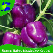 2018 High quality purple bell pepper seeds