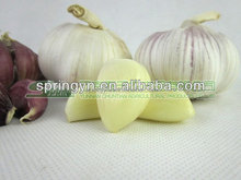 top quality Ivory White garlic & high land growing red type non rotten garlic for sale