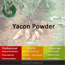 yacon tea/yacon root/yacon powder