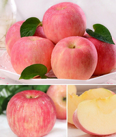 2015 new Fresh fruits red Fuji apples