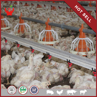 Yonggao Farming Homemade Automatic Feeding Chain System in Poultry Farm