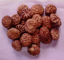 High Quality Flower Shiitake Dried Export Mushroom Price