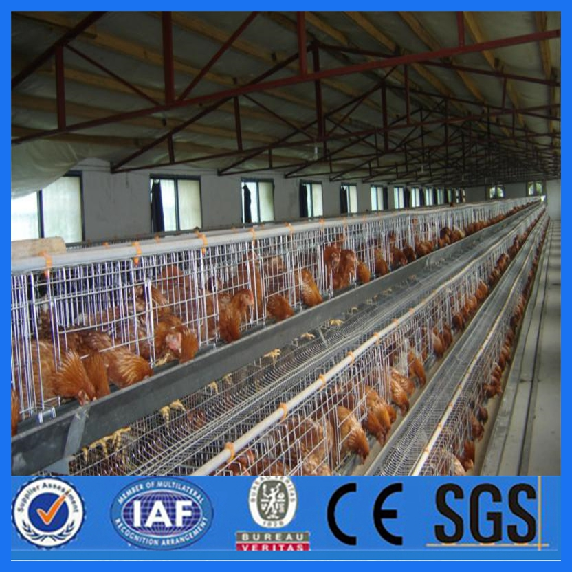 chicken layer cages for laying hen Design modern farming poultry battery cage