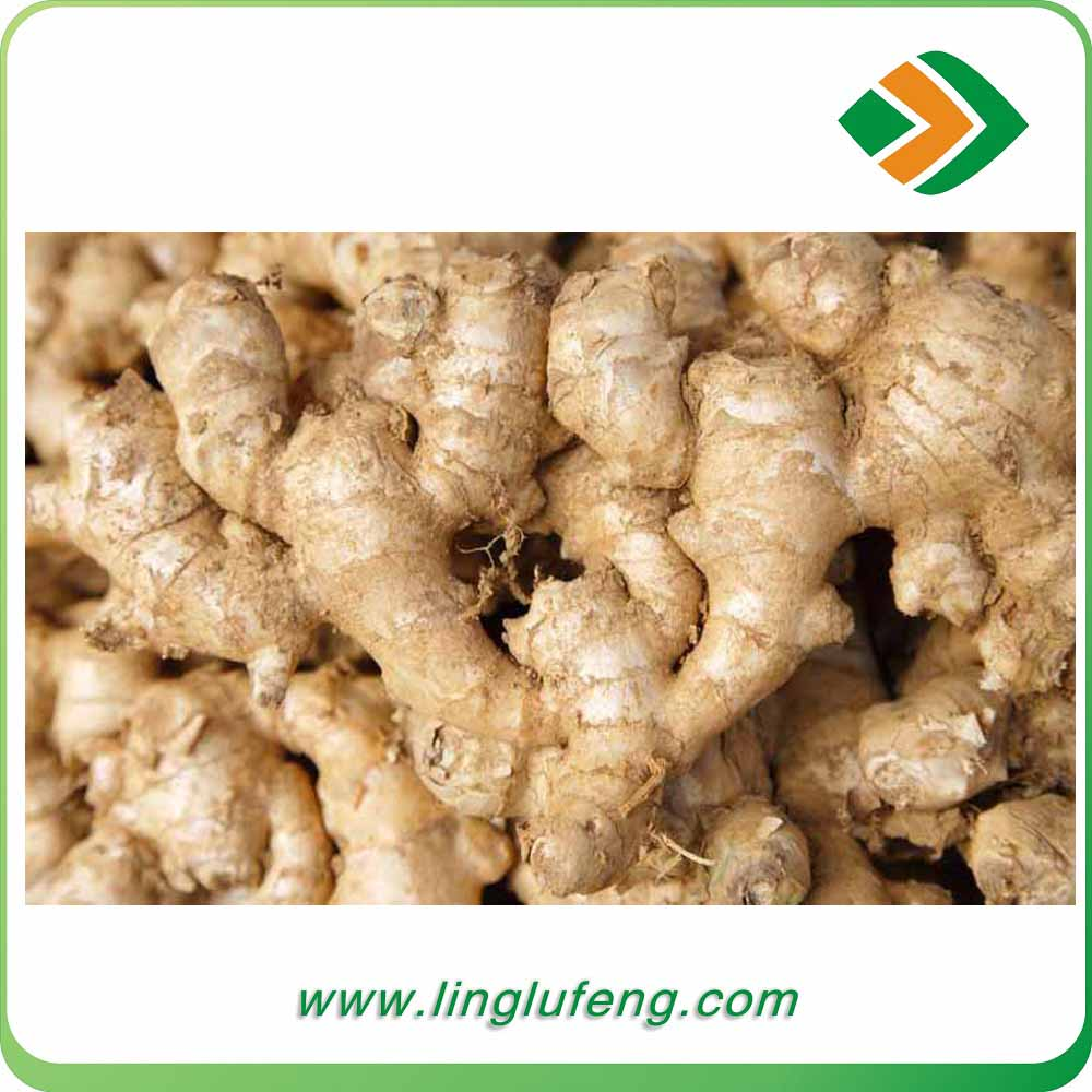 China suppliers fresh ginger air dry ginger 100g up