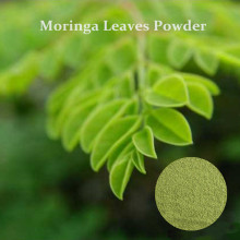 Natural moringa leaf powder for health supplement