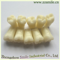 Hot sell permanent teeth with Straight Root/Permanent teeth suitable for 200 or 500/Deciduous Teeth