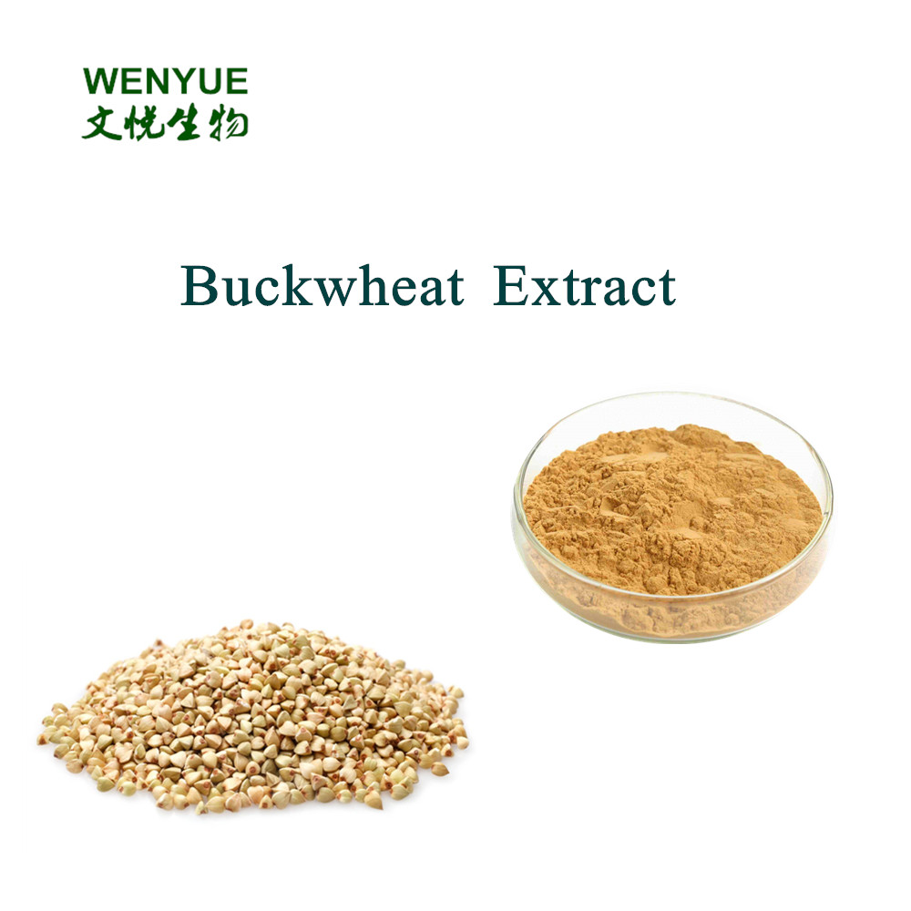 Natural Tartary Buckwheat Extract with 30% Buckwheat Flavone