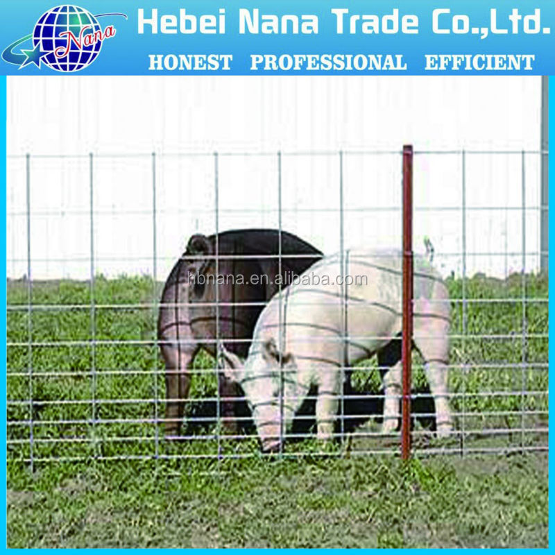 Security Steel Galvanized Cattle Welded Wire Mesh Panel / Cheap cattle panels galvanized welded wire mesh for sale