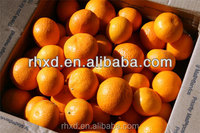 Chinese Wholesale Nanfeng Fresh Baby Mandarin Orange