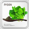 HPLC organic vegetables spinach powder with low price