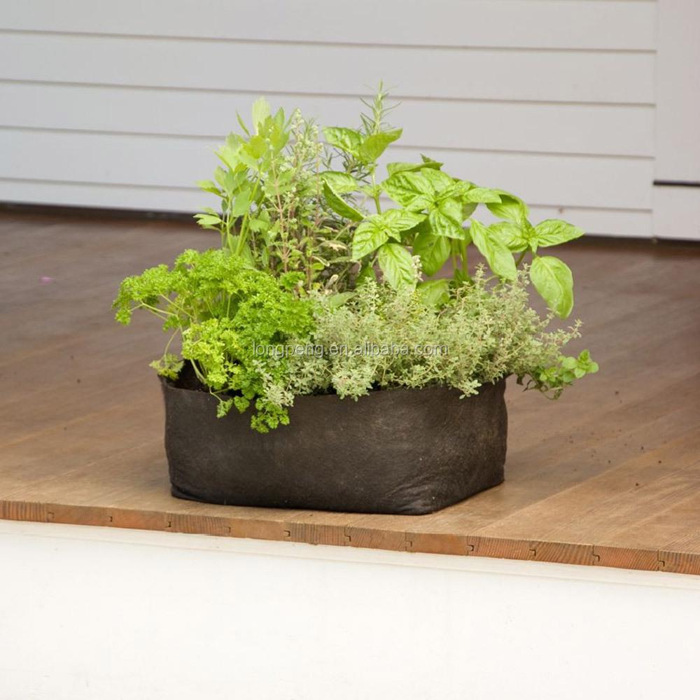 frais de planter aloe vera en pleine terre concept id es de design de terrasse. Black Bedroom Furniture Sets. Home Design Ideas