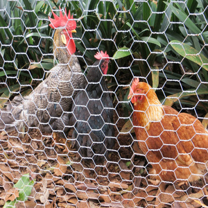 Alibaba china Galvanized Hexagonal Wire Mesh / chicken wire mesh with lowest price / Wire Netting