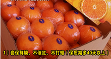 supply you high quality Navel oranges