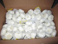 China farm fresh garlic price