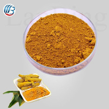 GMP standard water souble free sample bulk pure natural turmeric curcumin powder angelica archangelica root extract