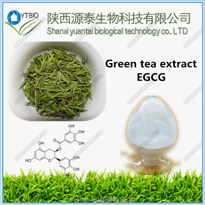Factory supply Green Tea Extract, Polyphenol/Catechins/,EGCG/L-Theanine