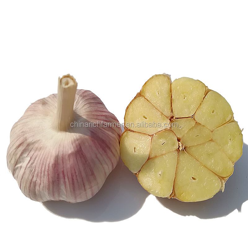 Export Price China Certified Fresh Red Garlic 5.0cm