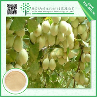 100% pure natural Low price Semen Ginkgo Seed Powder Extract 20% Flavones and Lactones