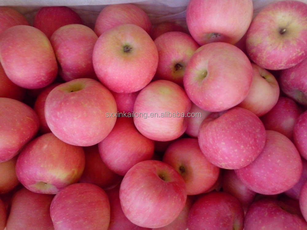 High quality new season fresh fuji apple with cheap price