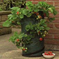 plastic strawberry grow bag