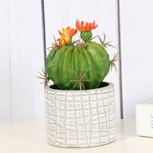 Best prices special design french style garden echinopsis tubiflora with flower plant potted