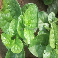 High Germination Rate 30Pcs/bag Malabar Spinach Seeds For Home Gardens Planted Vegetables Outdoor Plant