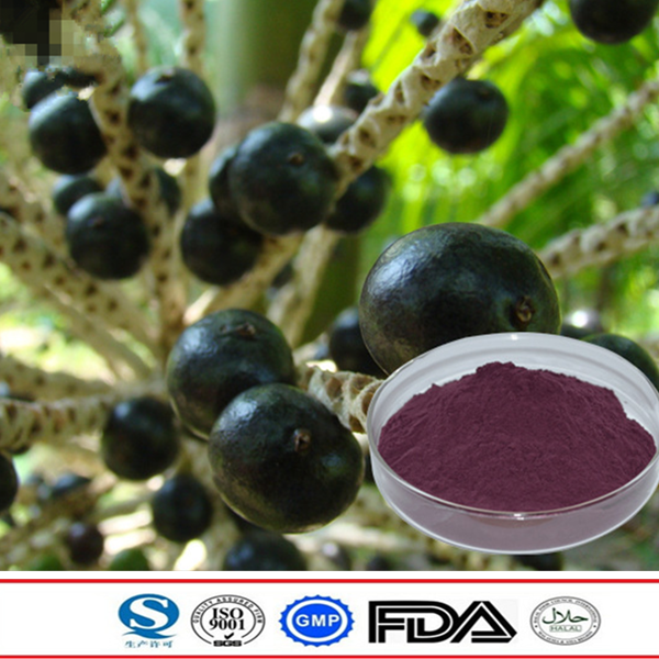 Natural Chinese traditional plant extract acai berry extract hot sale