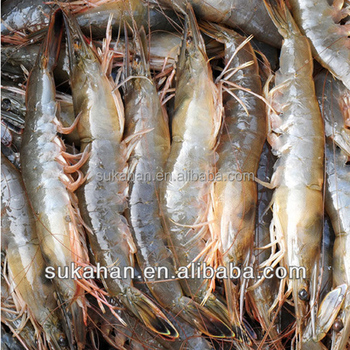 Aquatic Fish shrimp liquid Feeds Additives manufacturers