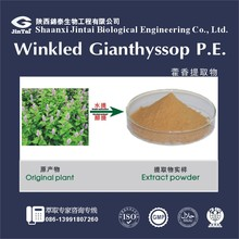 Herbal product extract by China supplier Wrinkled Gianthyssop Herb