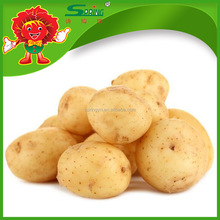 Fresh Peeled Chinese Potato Ready for Export