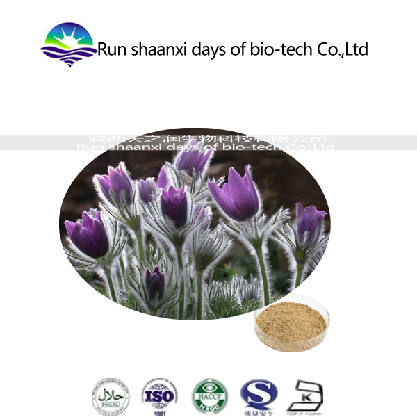 kosher factory supply high quality Anemone root powder Extract