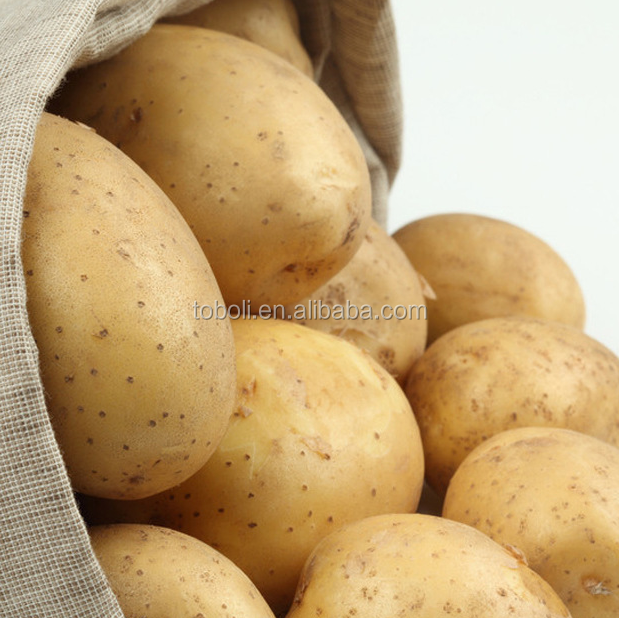 whole sale big quantity fresh yellow potato
