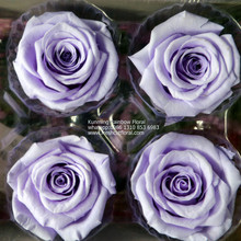 On Sale Eternal Rose Philippines On Sale All Seasons For DIY Projects