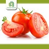 Brand new farm fresh tomatoes for sale with great price