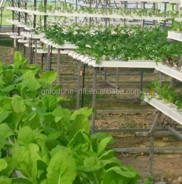 low cost agricultural tomato greenhouse farming nft hydroponic channel