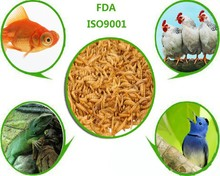 Mealworm Manufacturer Provide Straightly Dried Mealworm